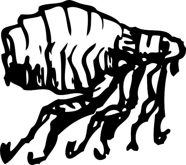 flea-29538_640